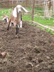 farm 045