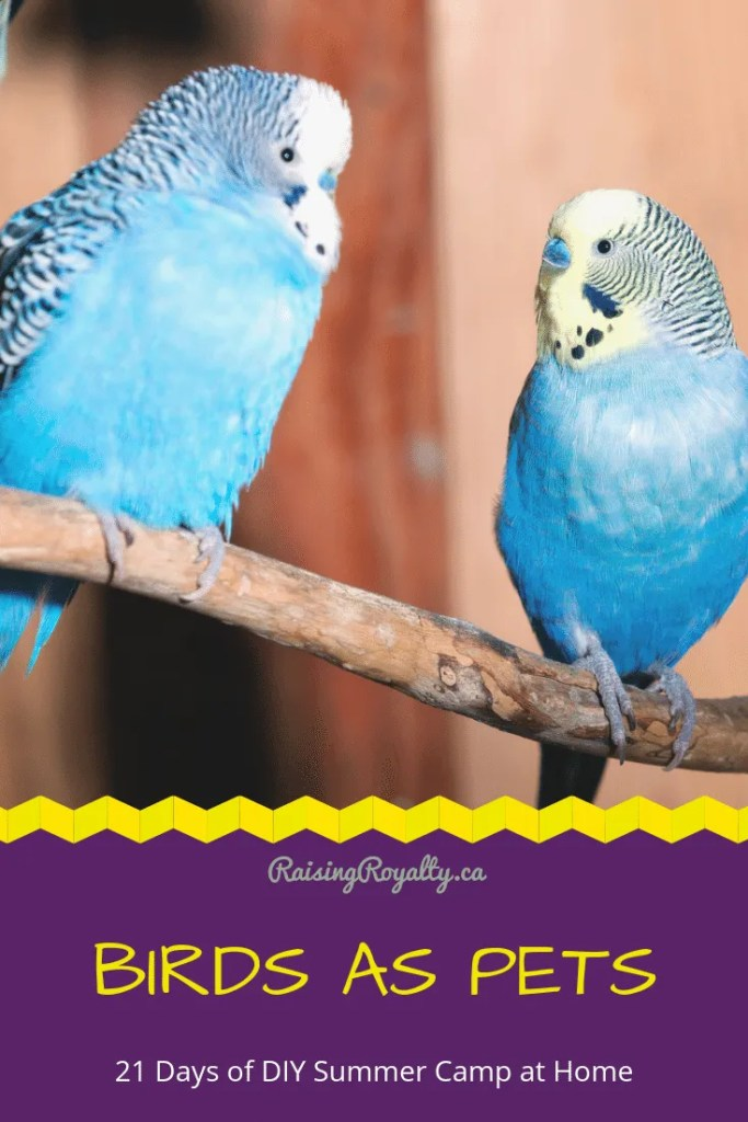 Let's learn about birds as pets in day 4 of 21 Days of DIY summer camp!  Birds can make great pets, and we can have lots of fun pretending.