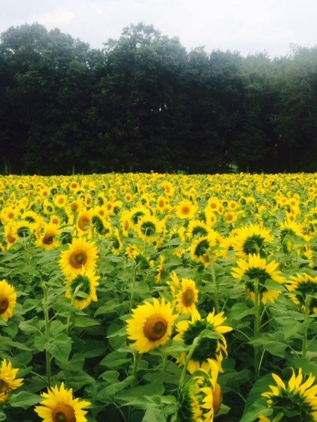 #MoreMinutes Sunflower Field
