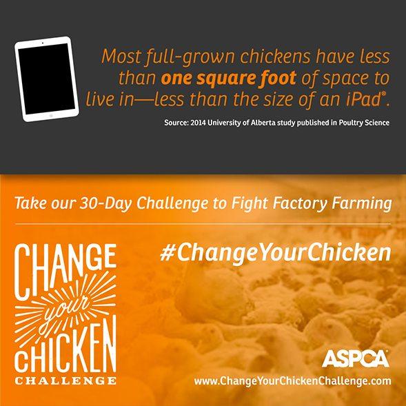 change-your-chicken