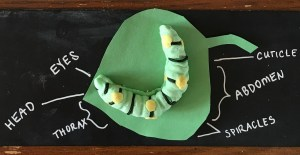 caterpillar unit study