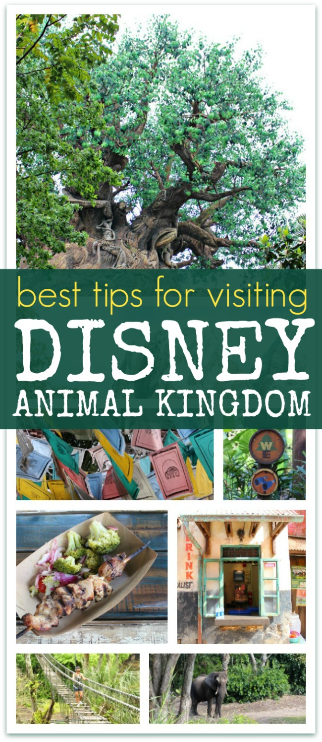 Best tips for visiting Disney animal kingdom