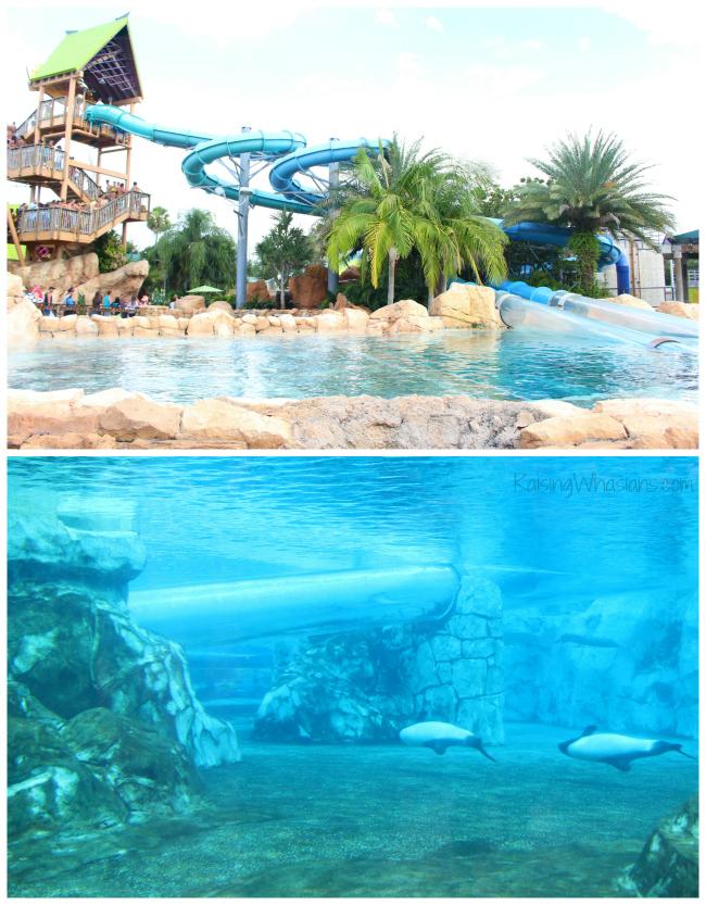 Aquatica dolphin plunge