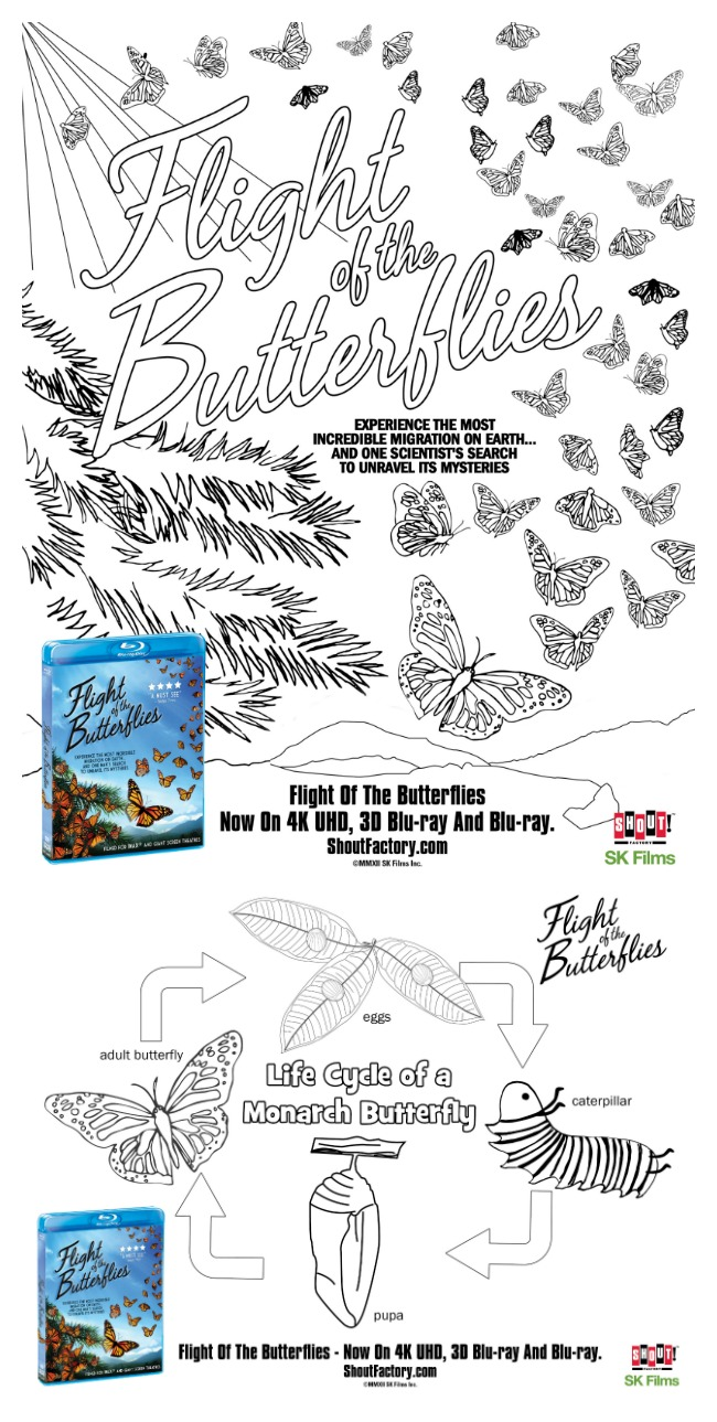 Free butterfly coloring sheets