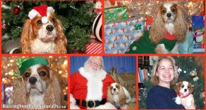 Dexter The Dog Enjoys Christmas: Wordless Wednesday Style