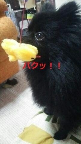ぱく.jpg