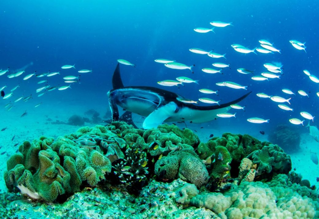Excursiones Raja Ampat - manta sandy