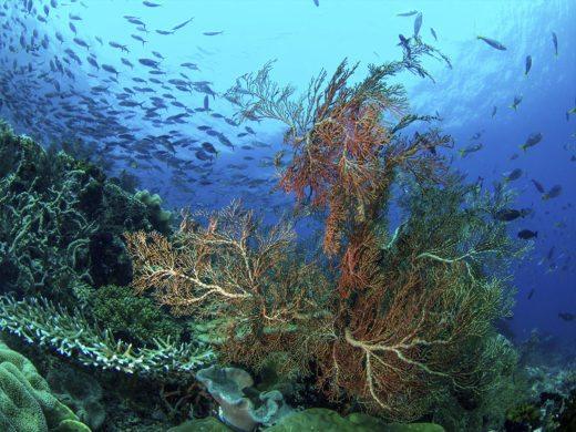 sea turtle biology and conservation Raja Ampat