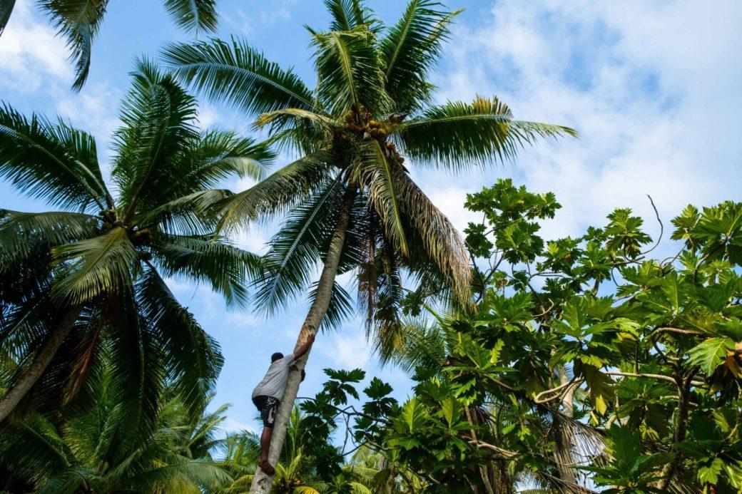 actividades isla misool