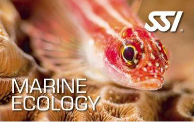 ecology speciality programs - marine ecology