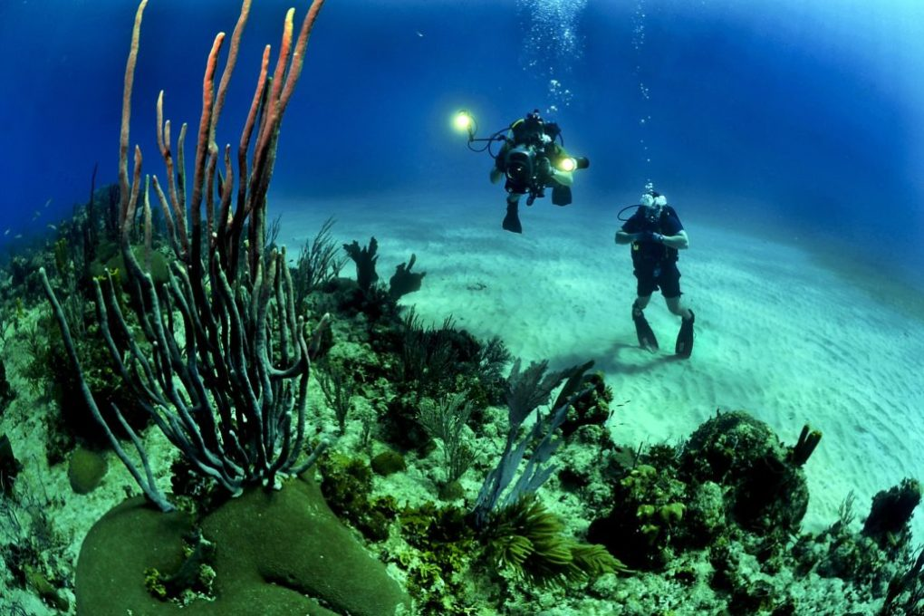 Raja ampat open water diving package - dive session