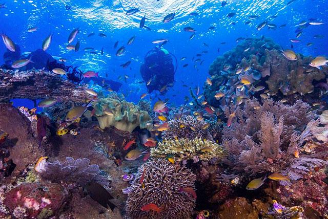 Raja Ampat Öko Ressort - Unterwasserwelt