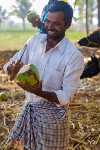 Coconut worker