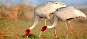 Best Time to Visit Bharatpur