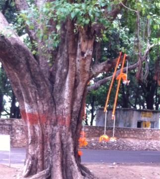 Kaanwars Hanging on a tree