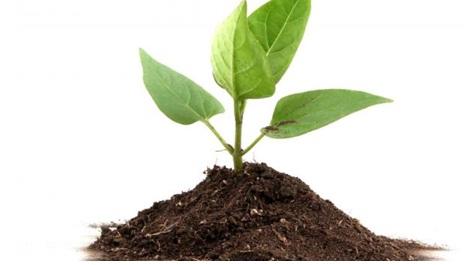 plant incerase tonic jaivik kheti
