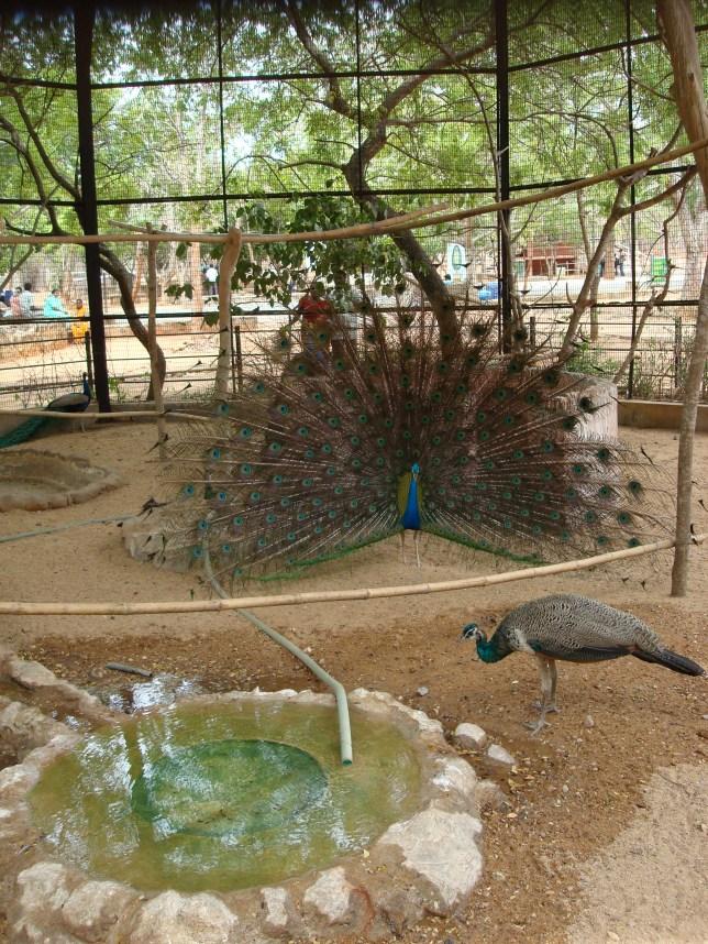 Vandaloor Zoo, Tamilnadu