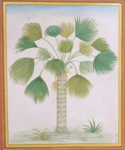 Palm Tree b006