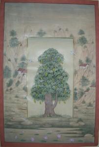Mango Tree b007