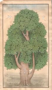 Banyan Tree Vertical b010
