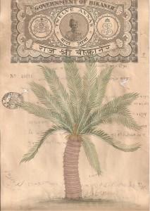 Palm Tree c004