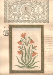 Mugal Flowers on old paper d021