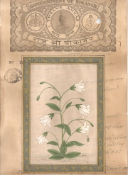 Mugal Flowers on old paper d023