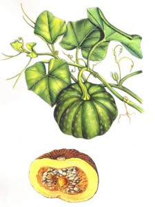 English Botanical Fruits f001