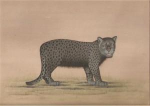 Animal i020