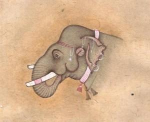 Elephant j014
