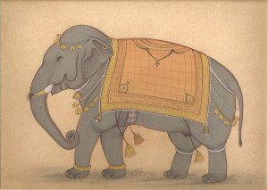 Elephant j016