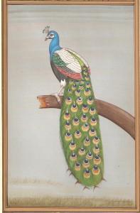Bird k001