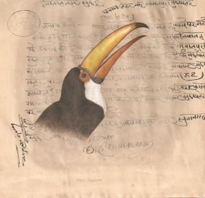 Bird k003