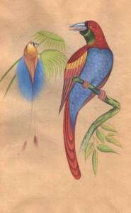 Bird k004