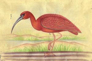 Bird k006