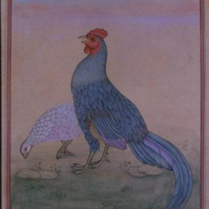 Bird k013