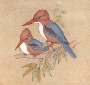 Bird k015