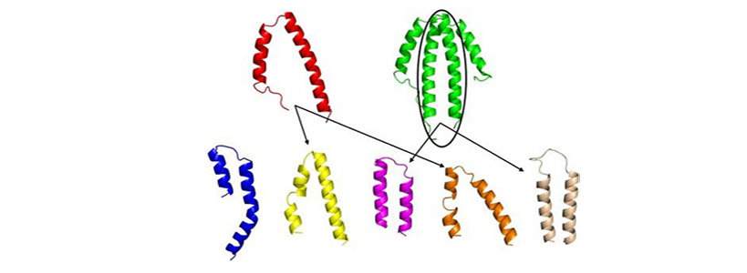 Structure-function analysis of NblA