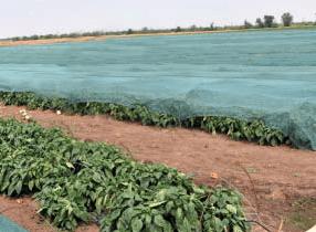 защитная сетка для затенения в сельском хозяйстве