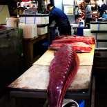 Seriously Huge Tuna