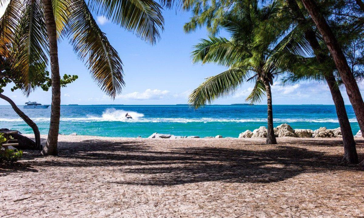 ヤシの木があるビーチ