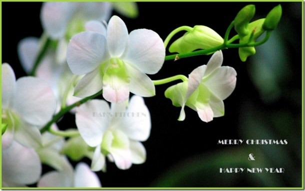 100ND40X8 Botanical garden,SG