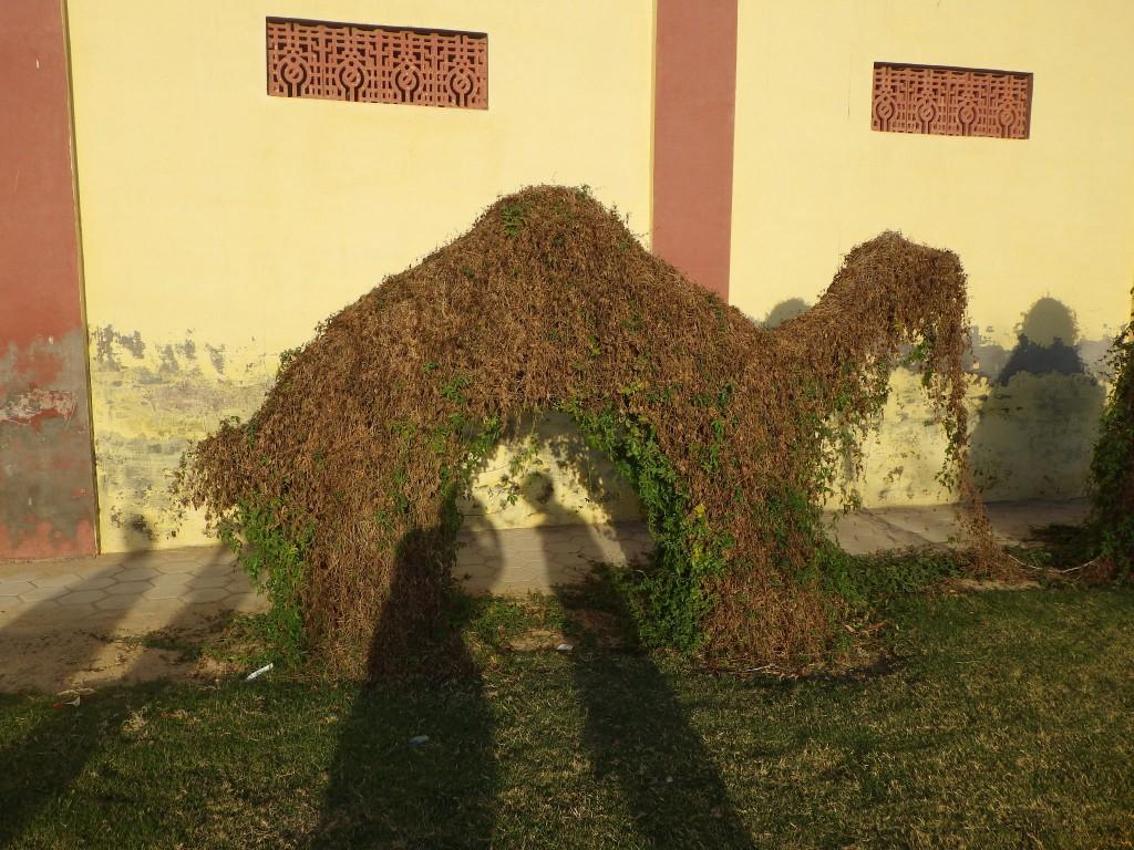 camel tree
