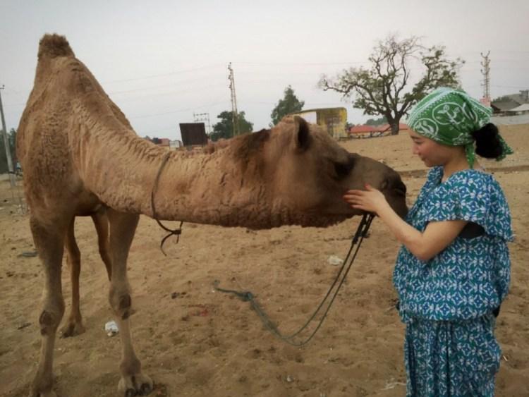 camel pushkar
