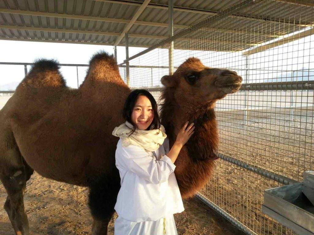 two humps camel
