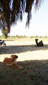 ラクダと犬