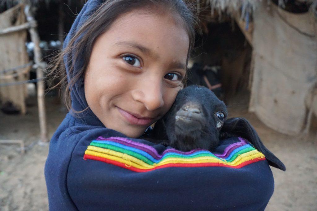 赤ちゃんヤギと少女