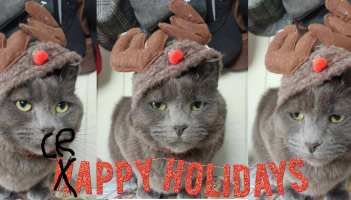 Cat with christmas antlers