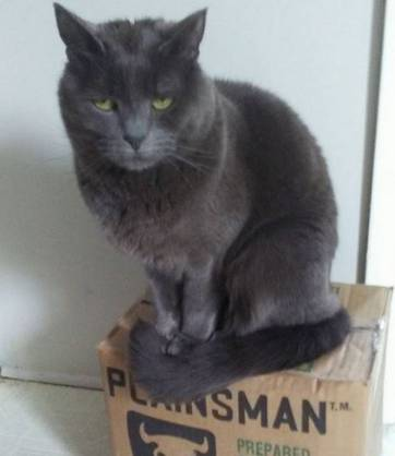 grey cat and box of clay