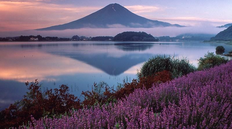 kawaguchiko_ lavender